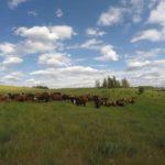 Workaway: première expérience dans un ranch