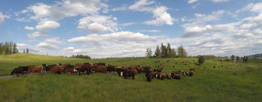 workaway horizon transition ranch
