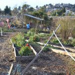uc gill tract farm berkeley transition