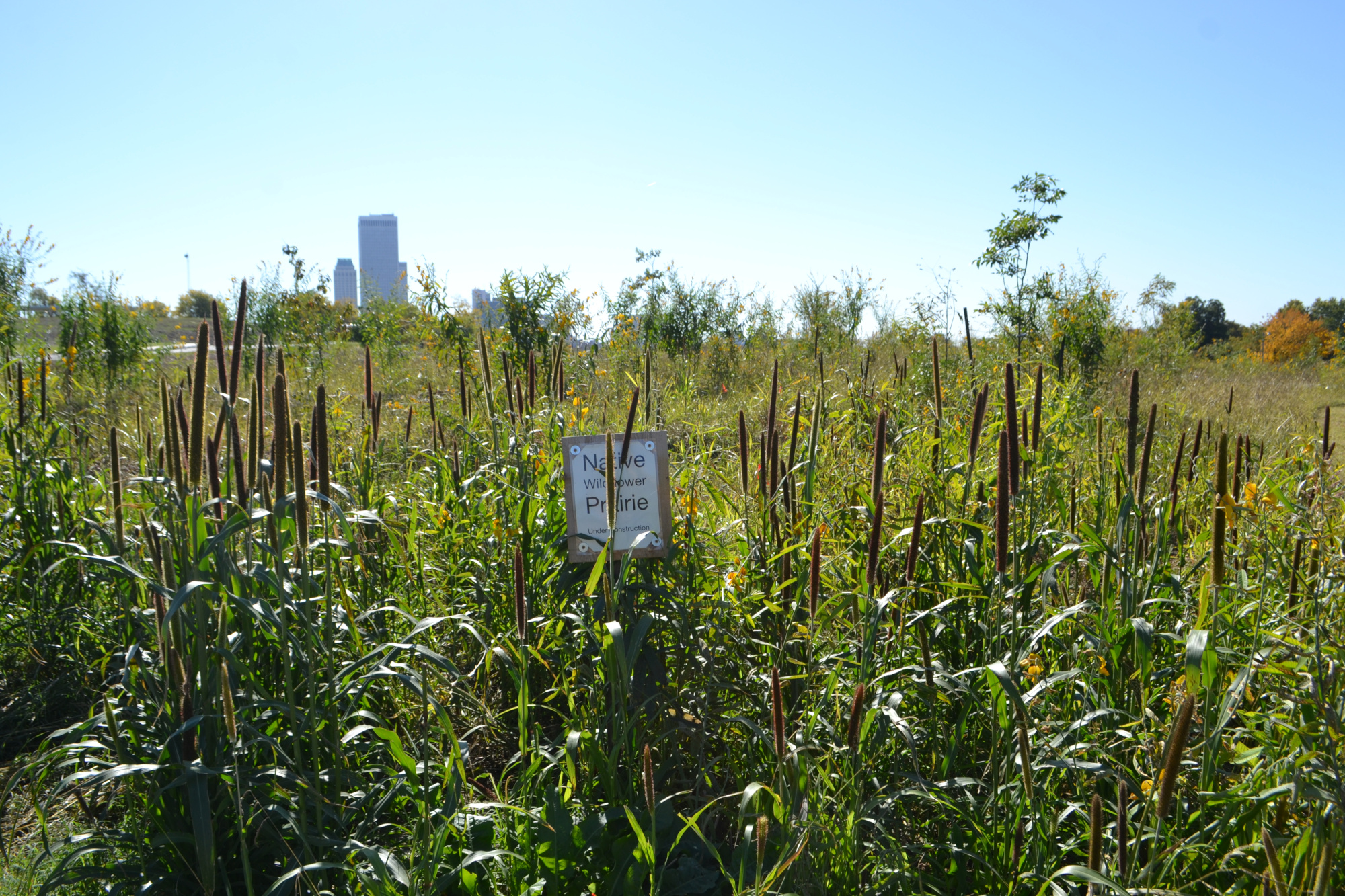A food forest in Tulsa, Oklahoma