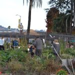 UC Gill Tract Farm, Berkeley, Californie, USA